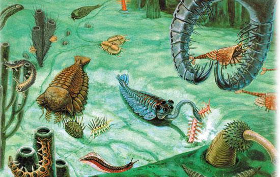Explosión Cámbrica: representación de la variedad de especies
